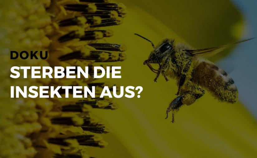 Dokumentation: Sterben die Insekten aus?